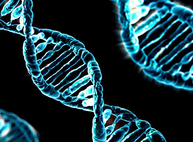O cercetare asupra ADN-ului dezvaluie cum putem trai mai mult