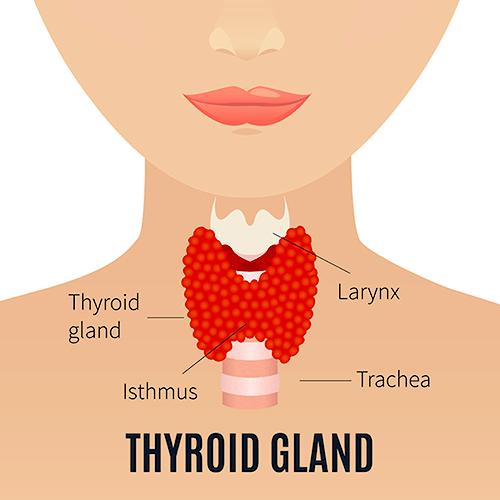 tiroida afectează durerile articulare gel împotriva osteochondrozei