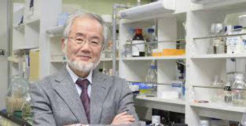 Premiul Nobel pentru Medicina in 2016 a fost castigat de profesorul japonez Yoshinori Ohsumi pentru descoperirea mecanismului autofagiei celulare
