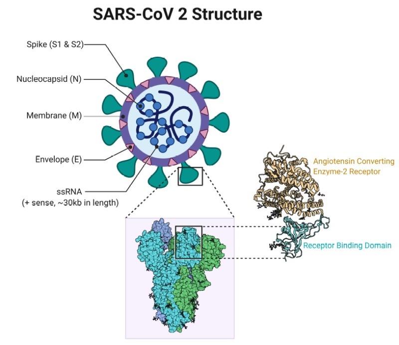 Ce tip de anticorpi produc vaccinurile?   Medlife